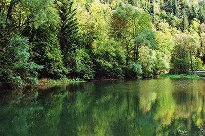 Fluss mit Wald